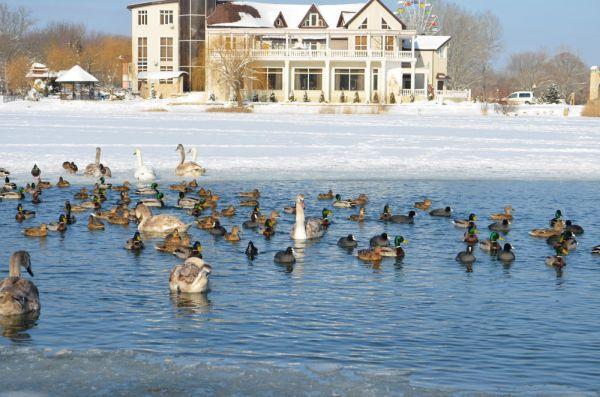 зимой какие экскурсии проводятся зимой в районе кавказских минеральных вод